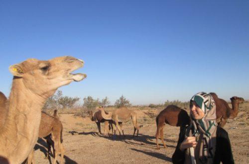 Article : Laghouat, à 430 km d'Alger